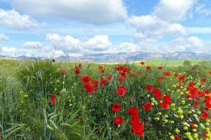 Primavera en Santiago-Pontones