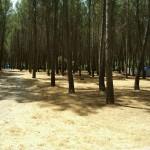 Pinar Camping Fuente de la Pascuala
