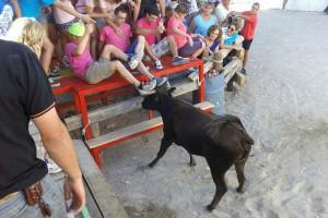 Vaquillas en las fiestas de La Matea. Fotografía Ángel Muñoz.